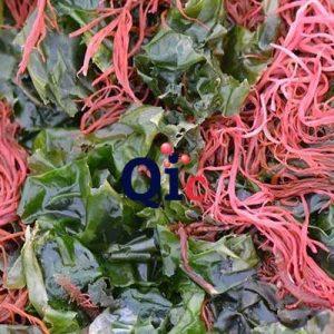 agar agar quimica industrial chile 2